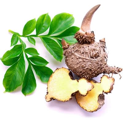 How Glucomannan look like
